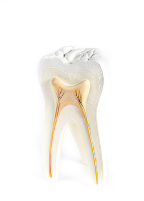 Non-Toxic Root Canals (yes there is such a thing)